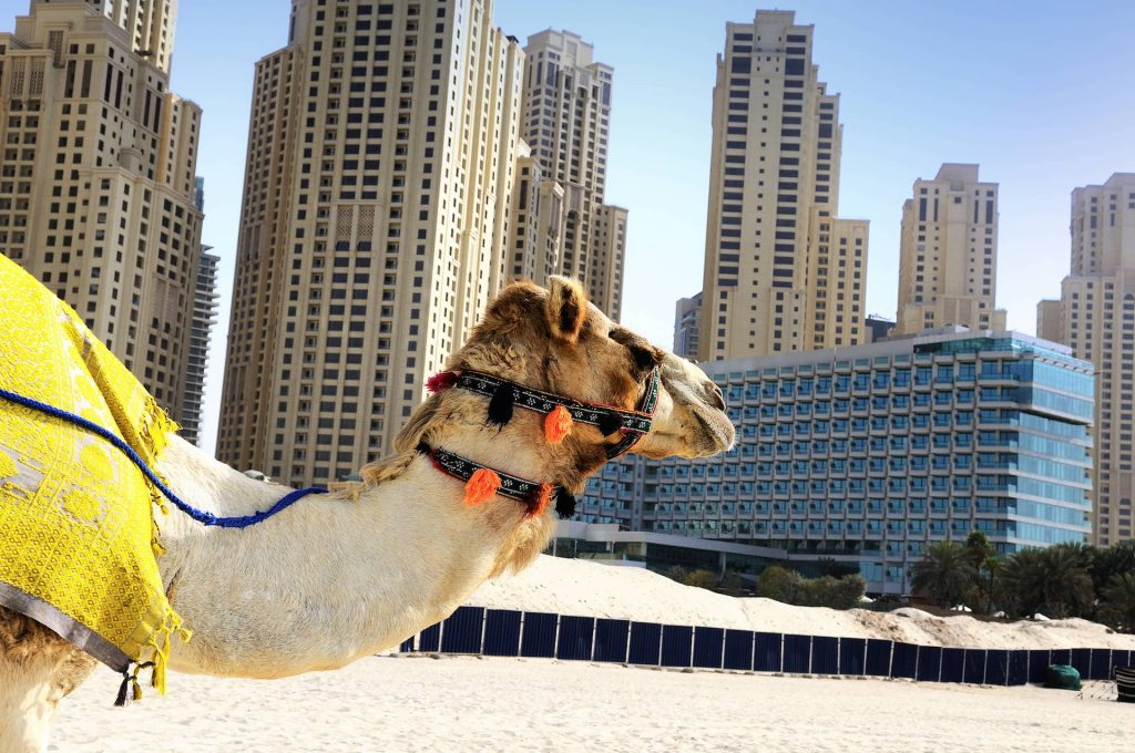 camel-city